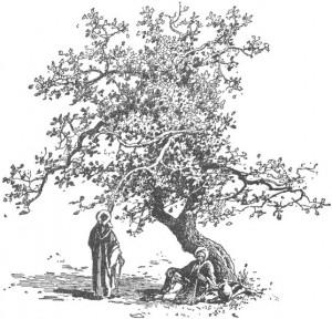 pohon ara by catholic jules