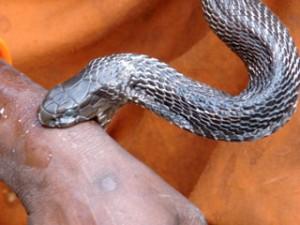 ular menggigit by ist