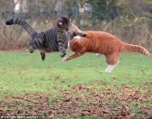 kucing-ninja-1
