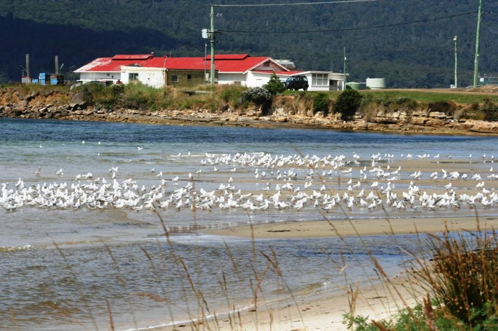 Esperance Bay seagul the beach and the house