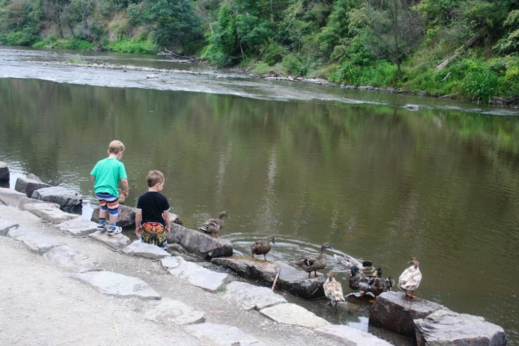 Warrandyte bebek di tepian sungai dan anak2