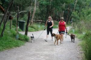 Warrandyte pejalan kaki dengan anjingnya