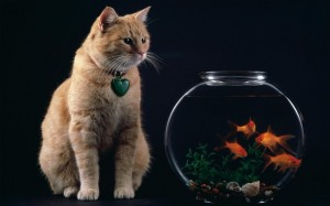 kucing dan aquarium by revandy