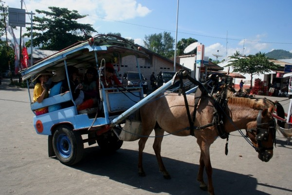 Naik dokar cidomo di Lombok